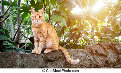 cute redhead cat sitting on a stone and looking into the camera