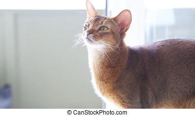 Cute Redhead Kitty. - Cute Redhead Kitty