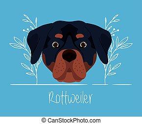 cute rottweiler dog pet head character