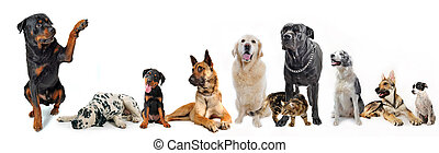cute rottweiler say hello with his paw to a group of dogs and cat