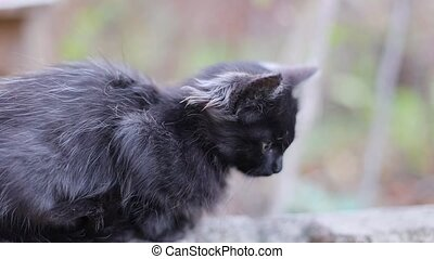 Cute scared black kitten sits on stone in the street, looks around