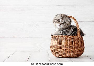 Cute scottish fold kitten in basket