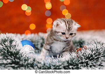 Curious scottish grey kitten sitting on the tinsel with the blurry shiny background of Christmas lights, New Year concept, copy space