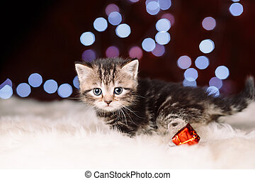 Curious scottish grey kitten sitting on the white fur and looking at the camera, blurry shiny Christmas lights on the background, New Year concept, copy space