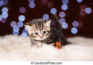 Curious scottish grey kitten sitting on the white fur with the blurry shiny background of Christmas lights, New Year concept, copy space