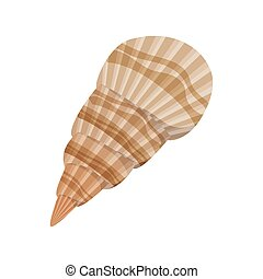 cute seashell on the sea in white background