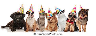 cute, sete, grupo, gatos, partido, cachorros