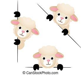 Cute sheep peeking from behind in various positions