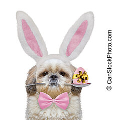 Cute shitzu dog with rabbit ears and easter egg. Isolated on white