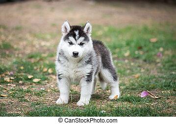 puppy on green grass
