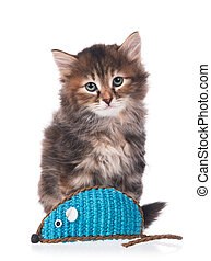 Cute siberian kitten with toy mouse isolated on white ...