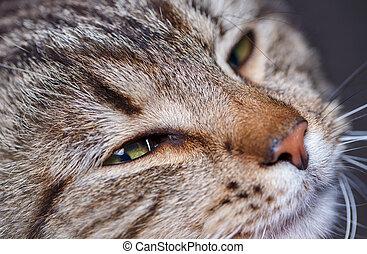 cute sleeping cat portrait