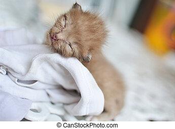 Cute sleeping kitten cat