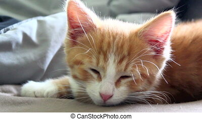 Cute Sleepy Orange Kitten