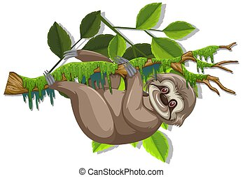 Cute sloth hanging on the branch on white background