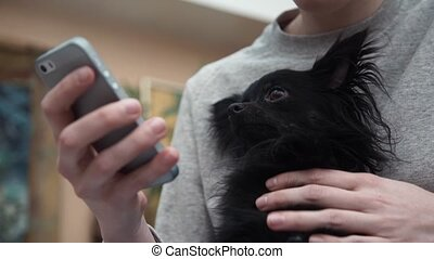 Cute small chihuahua doggy watchng video on smartphone -...