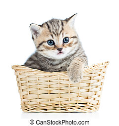 Cute small kitten in wicker basket