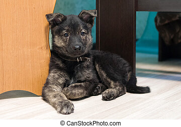 Cute small puppy brown color is sitting in the room near to table.