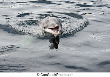cute smiling dolphin in the water