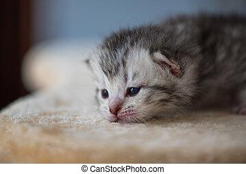 cute, sonolento, gatinho