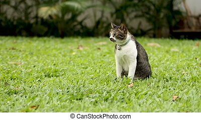 Cute spotted cat with a bell on the collar sitting on the...