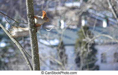 Cute squirrel looks away in spring on a Sunny day