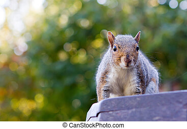 cute squirrel on a park bench