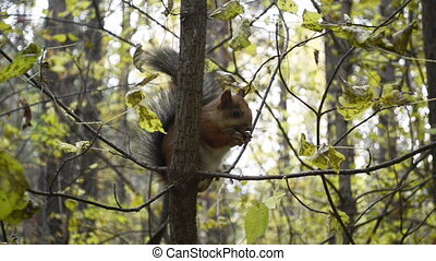 Cute squirrel on tree in the park close up
