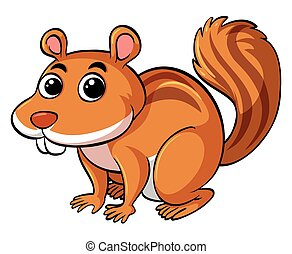 Cute squirrel on white background