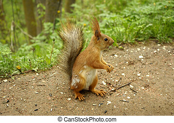 Cute squirrel sitting on the ground