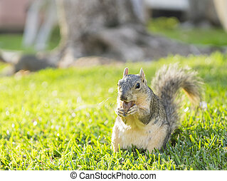 Cute squirrel with nut