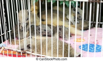 Cute squirrels in overcrowded cage. Little fluffy squirrels lying on soft towel in corner of overcrowded small cage on Chatuchak Market in Bangkok, Thailand.