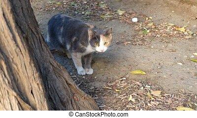 Cute  street cat looking at the camera