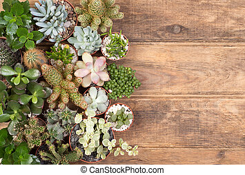 Cute succulent plants on wooden background