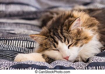 cute tabby cat sleeping on blue duvet