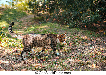 Cute tabby cat walks on the grass in the park on a sunny day in summer