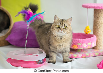 Cute tabby cat with many toys