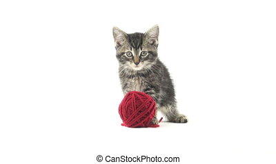 Cute tabby kitten and yarn - Cute baby tabby American...