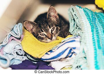 Cute tabby kitten asleep in the laundry