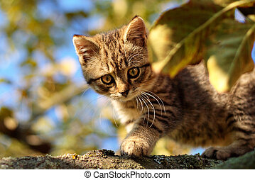 Cute tabby kitten climbs on branches of a tree