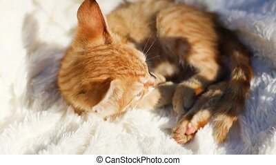 Tabby kitten lies and wakes up on a cozy white blanket. A charming little red pet. Sunlight on the face of an animal