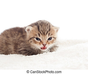 Cute tabby kitten on white blanket