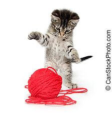 Cute tabby kitten playing with yarn - Cute baby tabby cat...