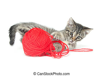 Cute tabby kitten playing with yarn