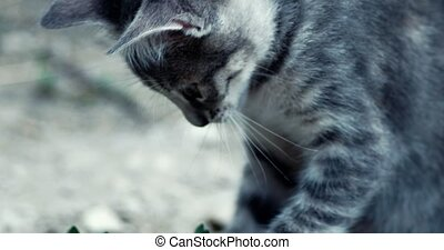 Cute Tabby Kitten Very CloseUp Handheld Shot 4k
