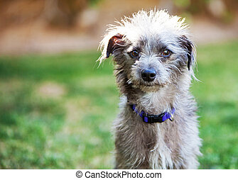 Cute Terrier Crossbreed Dog Outside