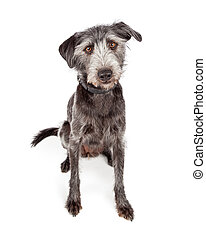 Cute Terrier Crossbreed Dog Sitting