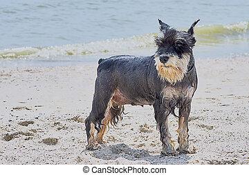 Cute terrier