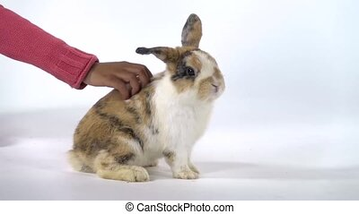 Cute threecolored rabbit is sniffing and looking around, hand little african girl is stroking him. Slow motion. Close up