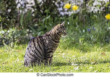 tiger cat relaxes at the green grass in the sun